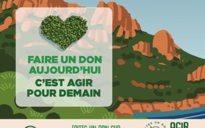 ONF : préservez la forêt de l'Estérel avec le projet «Agir pour la forêt»